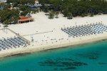 Delfin Playa Maiorca